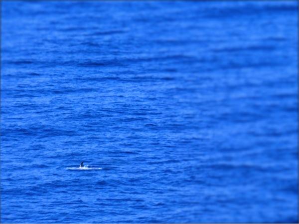 飛鳥 イルカ