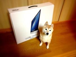 iMac 柴犬