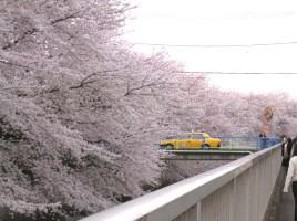 桜 タクシー 突っ込む